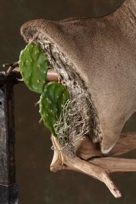 cactus-back-wd