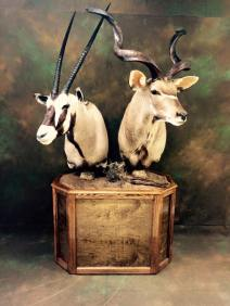 kudu-and-gemsbok
