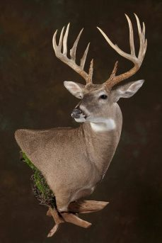lucianos-deer