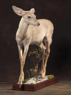 small-deer